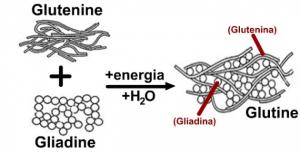 glutine: chimica